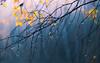 morning dew (Florian Grundstein) Tags: tropfen tau sonne morgen sonnenaufgang natur wald stimmung mood sun tree dew drops droplets light bayern oberpfalz upperpalatinate bavaria sunrise