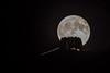 Monte Generoso (Lollo Riva) Tags: montegeneroso monte generoso luna piena fullmoon carciofo mariobotta botta vetta ticino switzerland night