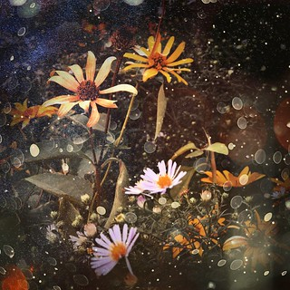 •Field flowers 💐