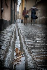 November (Annieverse) Tags: gamlastan stockholm sweden cobblestone autumn fall november rain scandinavia