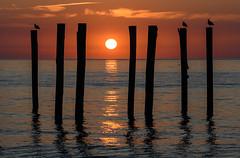 Sunrise (PMillera4) Tags: sunrise pilings birds gulls seagulls sun dawn