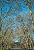 Trees (stephanrudolph) Tags: trees d750 nikon handheld london uk gb park england europe europa 50mm 50mm14 50mm14d 50mmf14 50mmf14d