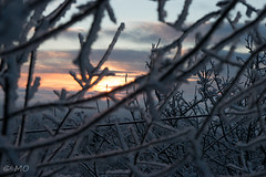 Norway's sunrise (mathieuo1) Tags: oslo norway nikon nature north europe winter snow sun light illumination sunrise tree branch cold through color ice outdoor travel explore discover early december details depth landscape scape sky skyglory complex nikonfr mathieuo