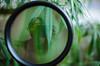 Sherlockweed (• Ruy Pereira) Tags: sherlock weed marihuana green leaf sweetleaf magnifyingglass detective hemp ego legalize growers thc sherlockholmes