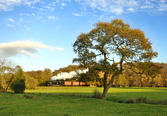 4277 on a goods train between Consall and Cheddleton. (johncheckley) Tags: d90 uksteam loco goods train tree