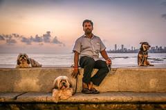 Mumbai, India (gstads) Tags: mumbai bombay india indian street streetscene streetphotography maharashtra dog dogs sunset sea ocean arabiansea netajishubashchandra nariman narimanpoint pet pets dogwalker dogwalking promenade marinedrive portrait man male bay ngc