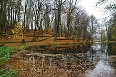 Autumn walk (Baubec Izzet) Tags: baubecizzet pentax autumn leaves lake nature flickrunitedaward