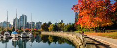 Stanley Park Autumn (Sworldguy) Tags: fall vancouver stanleypark colorful reflections yachts coalharbour seawall morning canada britishcolumbia outdoors serene foilage tree orange leaves nikon d7000 dslr boats