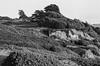 Fort Funston San Francisco (Postcards from San Francisco) Tags: film analog m6 trix diafine 50mmelmarm