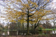 DSC08484.jpg (Eelco van Loo) Tags: autumn vondelpark boom tree amsterdam herfst