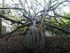 M2237840 M2237843 E-M1ii 7mm iso200 f8 1_6s S-AF (Mel Stephens) Tags: mzuiko pro 714mm plant plants tree crathes aberdeenshire scotland uk 20171123 201711 2017 q4 olympus omd em1ii m43 microfourthirds mirrorless best mft flora november very