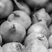 Onions - Wheelock Hill Farm