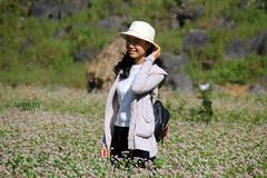 hagiang - amazing flower
