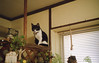 img099 (pon-ko) Tags: 弘前 hirosaki superiaxtra400 猫 cat rollei35s