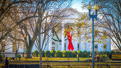 2017.12.01 Red Ribbon at the White House, World AIDS Day, Washington, DC USA 1133
