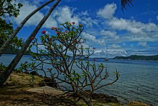 Tropical Bay Paradise