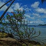 Tropical Bay Paradise thumbnail