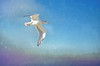 Soaring on the Wind (Bud in Wells, Maine) Tags: blue gull sky texturebytota hss seagulls birds newengland
