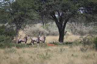 Namibia Luxury Hunting Safari 306