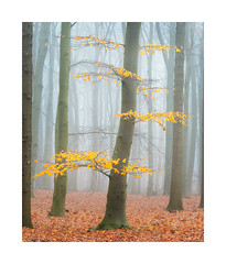 The last leaves (jos.pannekoek) Tags: winter herfst autumn forest bos nederland landscape landschap d500 70200f4