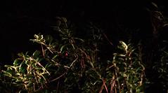_MG_2895.CR2 (jalexartis) Tags: nightphotography night nightshots rain