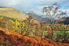 Glen Lyon Woodland Walk (eric robb niven) Tags: ericrobbniven scotland glenlyon perthshire walking autumn