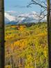 Through the Trees (Nancy King Photography) Tags: trees gunnisonnf aspens mountains bole clouds colorado fall ohiopass snow