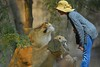 Big Cat (swong95765) Tags: cat lioness woman female lady cute situation