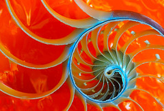 nautilus orange (Smiffy'37) Tags: orange crop shell design swirls fineart object cellophane macro closeup abstract