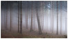 Nebelwald (Velaeda) Tags: carinthia fog knappenberg kärnten forest nature trees