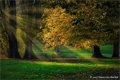 Rijsterborgherplantsoen (Hans van Bockel) Tags: bomen herfst kleuren luminar natuur natuurgebied photoshop plantsoen rijsterborgher nikon d7200 1680mm