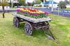 Waratah, Tasmania. (Steven Penton) Tags: tasmania australia waratah tulips cart