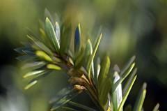 macro hunting (larrynunziato) Tags: macro macrotwig experimental selectiveblur