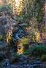 Bruar Trees (Briantc) Tags: scotland perthshire bruar forest trees