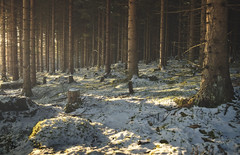 Woodlands (thobiasphoto.myportfolio.com) Tags: sunlight snow winter abigfave