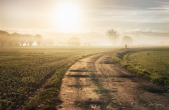 Country road. (rudi.verschoren) Tags: outdoor landscape sun artistic eos europe europa exposure trees yellow overlooking panorama path field mist misty sky flanders road sand cold mood glow light lines long canon 70d belgium nature