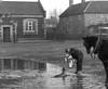 The Village Seal (theirhistory) Tags: seal pond village wareham man horse