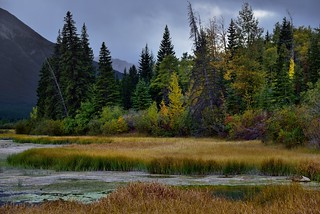 Marshland and Some Colorful Trees Along the Shores of Vermillion Trees