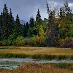 Marshland and Some Colorful Trees Along the Shores of Vermillion Trees thumbnail