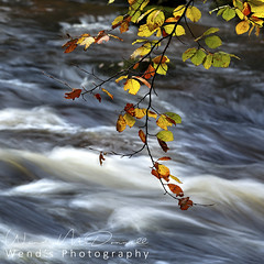 A splash of colour (Wend's photography) Tags: atmosphere autumn autumnal britain dales england landscape lee longexposure northyorkshire northyorks outdoor river rural scenery trees uk waterscape wharfedale wharf yorkshire yorkshiredales wendsphotography wwwwendsphotographycouk leaves beech photography