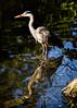 Moment of Reflection (MrBlueSky*) Tags: greyheron heron bird nature outdoor water kewgardens royalbotanicgardens london aficionados pentax pentaxart pentaxlife pentaxk1 pentaxawards pentaxflickraward colour