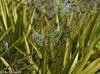 Jewels on the Trail (11Jewels) Tags: canon 70300 oldmiakkapreserve sarasotafl jewels morningdew webs trail florida