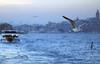 Bosphorus (Engin Süzen) Tags: boğaz boğaziçi bogazici bosphor bosphorus istanbul turkey türkiye bird birds seagull sea ship city galata deniz vapur