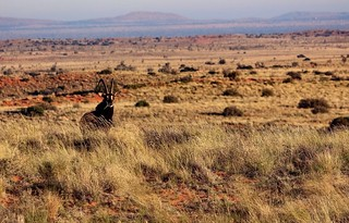 South Africa Hunting Safari - Northern Cape 72