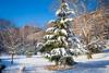 Frosted Morningside Tree_2880 (Punk Dolphin) Tags: harlem newyorkcity manhattan newyork winter snow trees snowball park morningsidepark buildings branches scenic morning