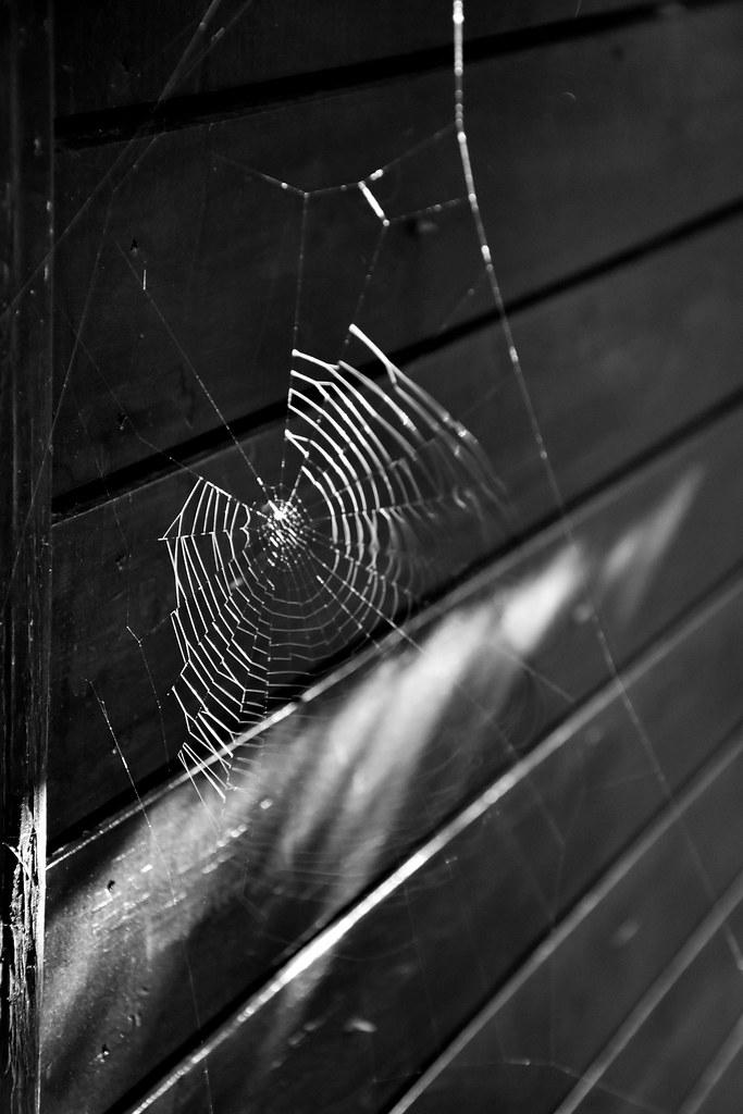 Araign e noir maison ventana blog for Araignee de maison