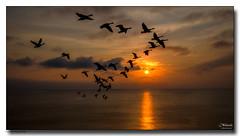 On-The-Way-Home (jeremy willcocks) Tags: devon geese uk colour landscape sunset flying sky jeremywillcocks wwwsouthwestscenesmeuk fujixpro2 xf1024mm south hams