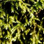 Moos am Baum thumbnail