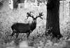 Portrait of a Deer (Outdoorjive) Tags: photo desktop flikr stevepalmerphoto places uk eastanglia events animals other walking norfolk waog holkham england unitedkingdom gb