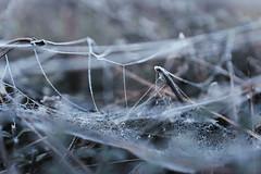 Frozen Web (Adam R.T.) Tags: frozen blue ice winter cold web trees plant frost dark vapid arid lifeless alone creepy emptiness urbex urbexground urbexeurope france alsace
